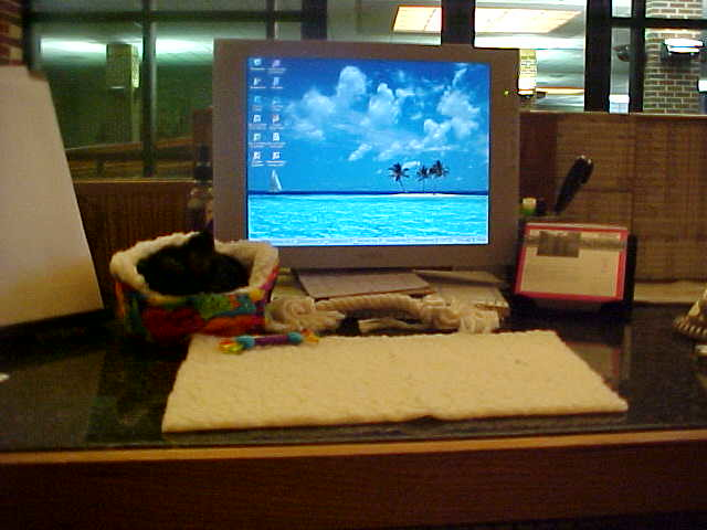Sleeping Desk Puppy