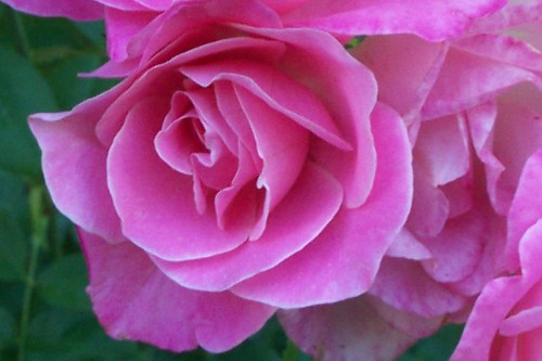 benbow flower 8