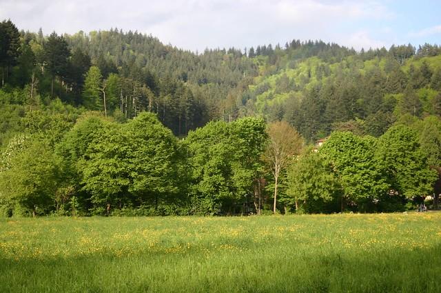 Forest landscape III | Flickr - Photo Sharing!