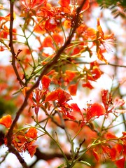 flower, branch, tree, red, plant, flora, produce,