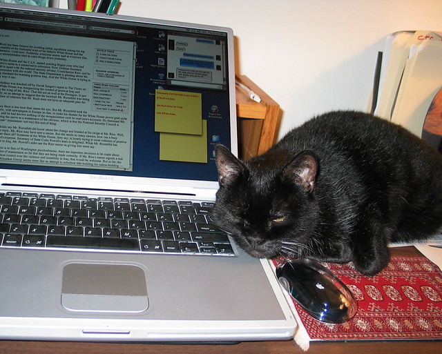 Kitty on PowerBook with mouse