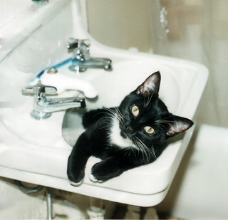 Jack in Sink (again)