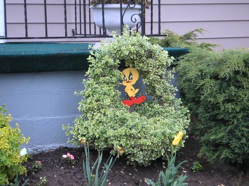 Tweety in Bush