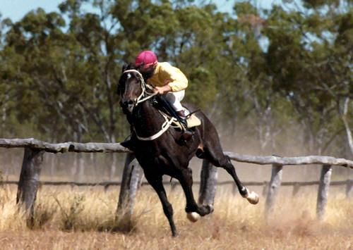 horse_race_mingella2 by RaeAllen
