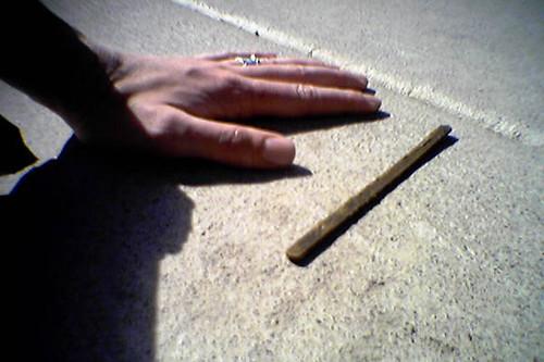 corn dog stick