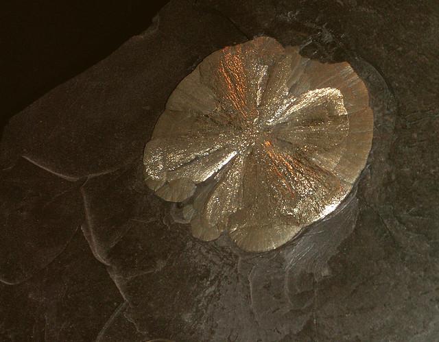 Pyrite Disc Specimen from Flickr via Wylio