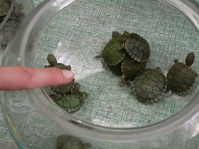 mini pet turtles