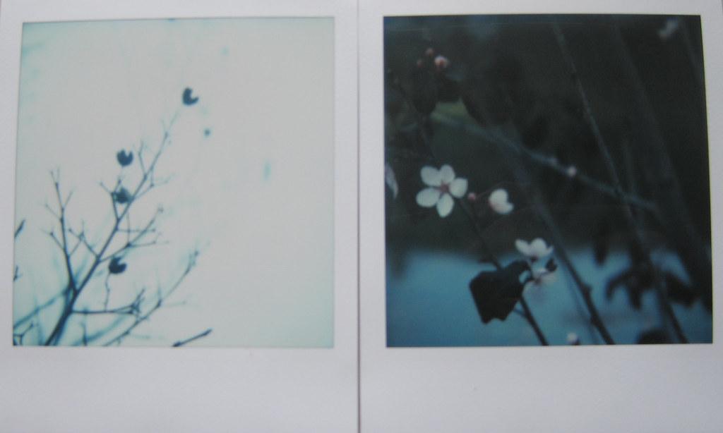 winter_spring