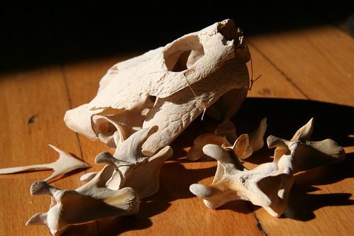 Bones are Echoes