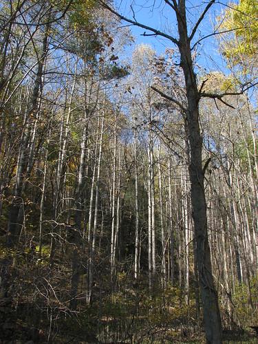 trees geotagged virginia geo:lat=3820472 geo:lon=7956194