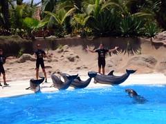 Loro Parque Dolphins