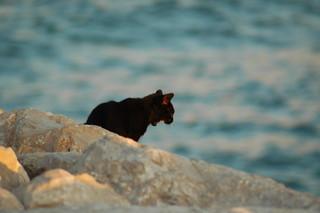 Image of  Tarquinio  near  Costa de Caparica. ocean sea cats beach portugal water animal cat mar kitten albaluminis kitty kittens gatos gustavo gato caparica gustty veríssimo gustavoveríssimo wwwflickrcomphotosgustty