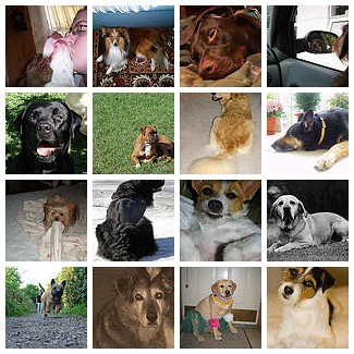 ! Love My Dog(s) November '06 Mosaic