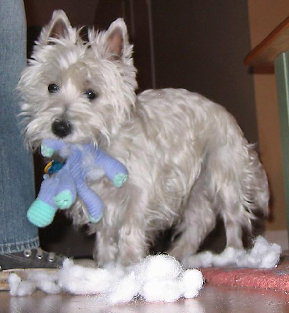 Dog Toy Destroyer Reward