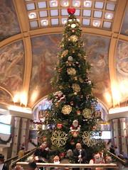Big tree at the mall