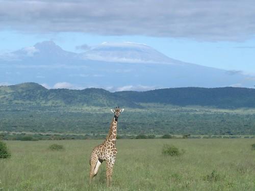 Mt Kilmanjaro & Giraffe
