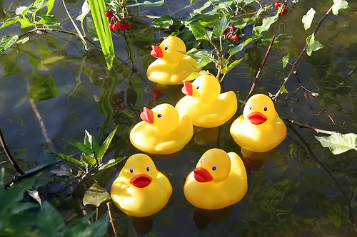 what rubber duckies like best