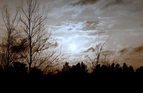 tree silhouette manipulated sunrise landscape louisiana batonrouge roadside mrgreenjeans gaylon gaylonkeeling