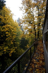 autumn leaves on back deck looking north    MG 4726