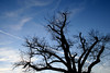 Baum gen Himmel by robkru