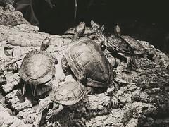 Turtle lovin'