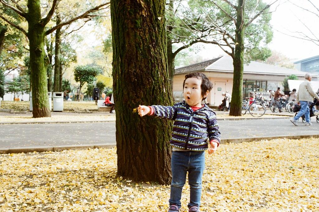 光が丘公園 Tokyo, Japan / Kodak ColorPlus / Nikon FM2 在光丘公園這裡沿路都是銀杏樹,那時候樹上的銀杏差不多都快掉光了。  看到一個小弟弟很可愛的在玩地上的銀杏葉,媽媽就在旁邊看著他玩,我有請求媽媽讓我拍,好感激!  就拍下這可愛的畫面!  Nikon FM2 Nikon AI AF Nikkor 35mm F/2D Kodak ColorPlus ISO200 7412-0038 2016-11-20 光が丘公園 Tokyo, Japan  Photo by Toomore