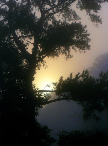 morning pink blue trees tree nature yellow fog contrast sunrise catchycolors landscape ilovenature louisiana purple batonrouge backlit thesouth mrgreenjeans gaylon blackwaterconservationarea gaylonkeeling