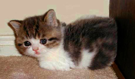 cute sad kitten