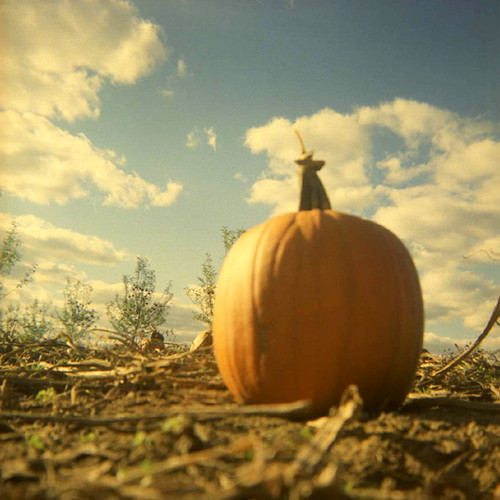 Duaflex: Pumpkin Patch