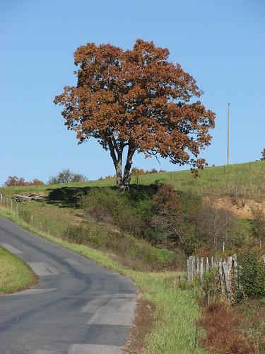 road tree fence geotagged virginia geo:lat=3829736 geo:lon=7943583