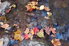 Fall 2006 - Leaves in Creek