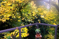 gorgeous view from our back deck in fall