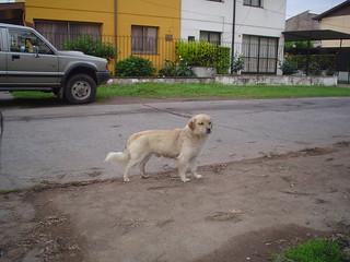 2006.10.27 - Perrito