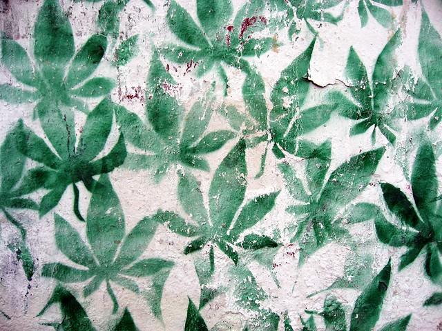 cannabis stencil flickr photo sharing
