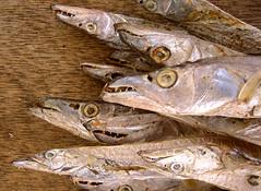 animal, fish, fish, seafood, capelin, food,