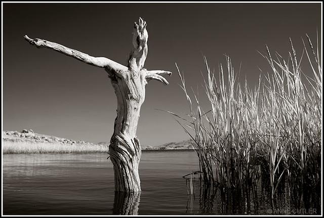 Dead Wood Walking