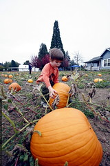 """""""this pumpkin is too heavy""""    mg 2073"""