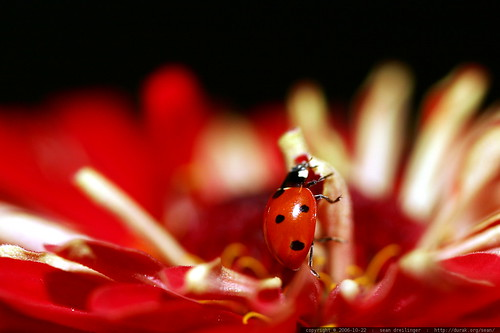 ladybug going up    MG 2712