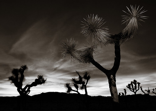 joshua tree skyscape