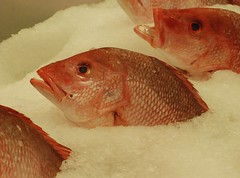 animal(1.0), fish(1.0), fish(1.0), red snapper(1.0), red seabream(1.0), snapper(1.0),