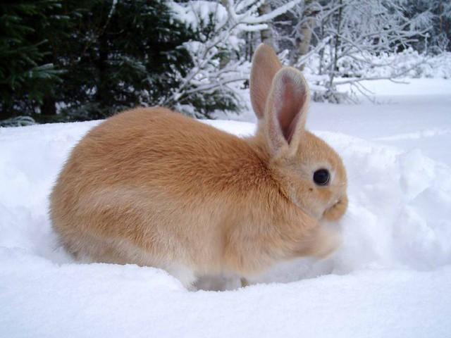 playing bunny