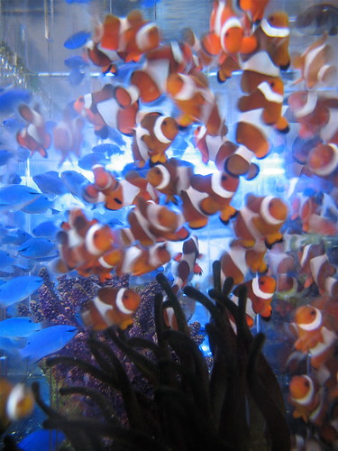 clown fish in this awesome aquarium store