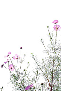 Cloudy day's cosmos