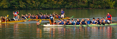 coxswain, vehicle, sports, rowing, recreation, outdoor recreation, watercraft rowing, boating, water sport, watercraft, dragon boat, boat, paddle,
