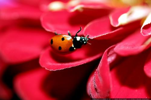 ladybug upside down    MG 2734