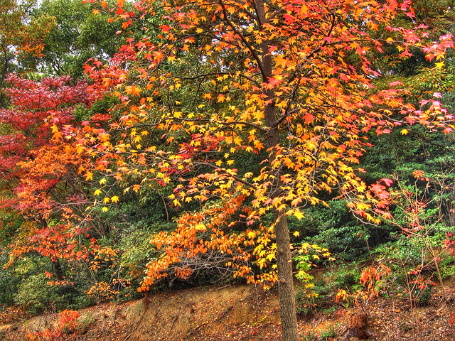 Photo:Autumn parks of Nagoya (HDR) By EugeniusD80