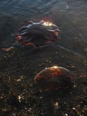pollution, marine biology,