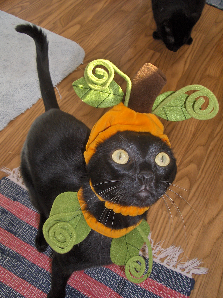 281684004 9678394cf0 b A Caturday Collection, Cats in Costumes Ready for Halloween