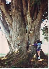 I Love Big Trees