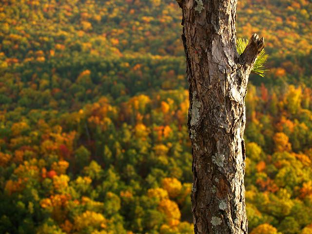 Tree atop Flatside